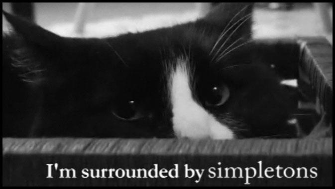 I am surrounded by simpletons. Henri le Chat with ennui.
