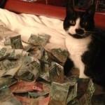 ca$hcats