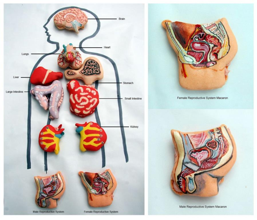 Anatomy in Macarons